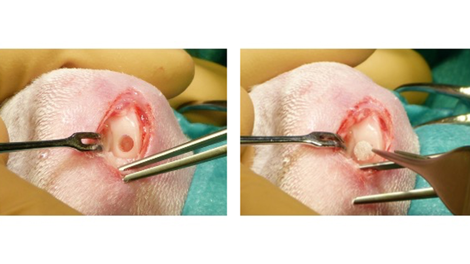 in vivo Assessment of Implantable Devices Intended to Repair or Regenerate Articular Cartilage