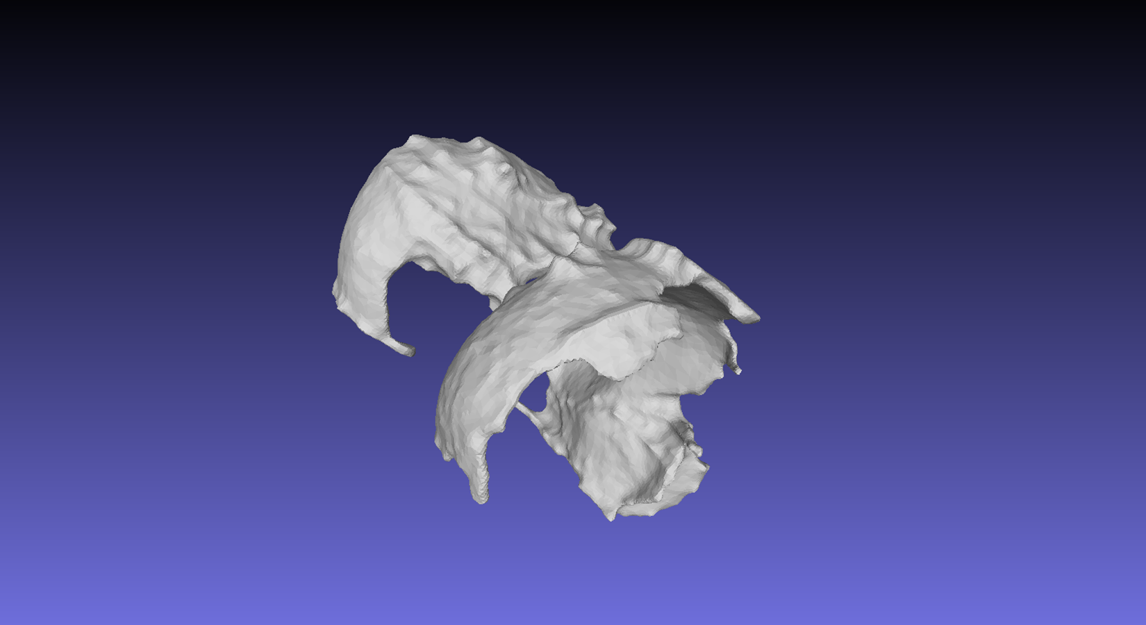 Articular Cartilage 3D model